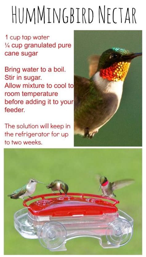 diy hummingbird nectar recipe easy and great for the kids