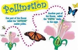 Pollination Diagram Jpg