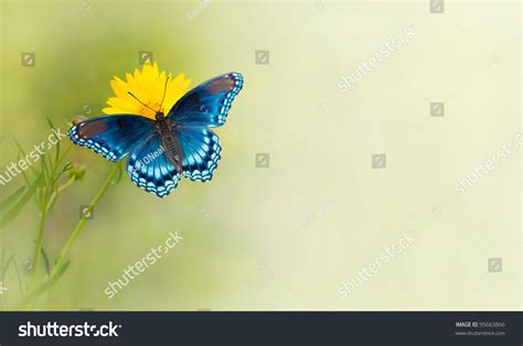Blue Butterfly On Yellow Flower Business Card File Size Free Label Template For Managing Director Construction Freepik Font Recommendations Picture Frame Masters Degree Brochure And Holders