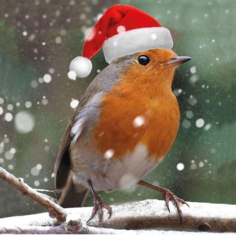 merry robin christmas cards x10 hospice