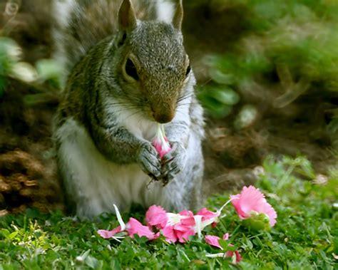 keeping squirrels away from bulbs how to keep squirrels away from your plants blog nurserylive com gardening in india
