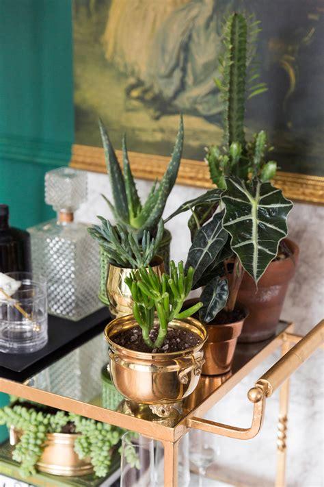 how to create an indoor garden