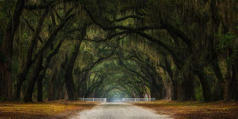 photography landscape nature oak trees gates dirt