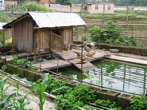 Backyard Barn And Farm