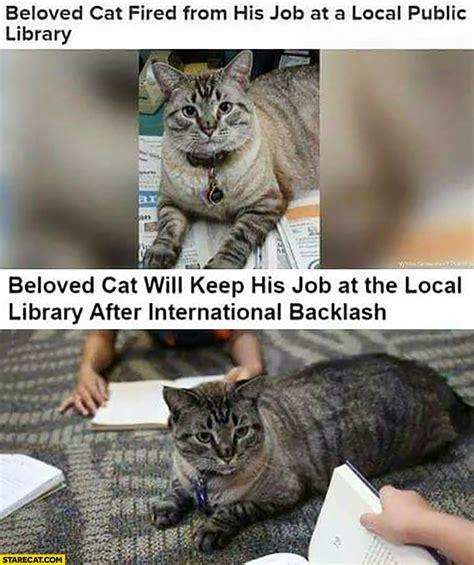 cats  captions starecatcom