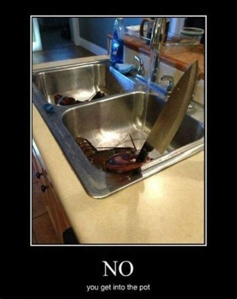 collection  hilarious demotivational posters