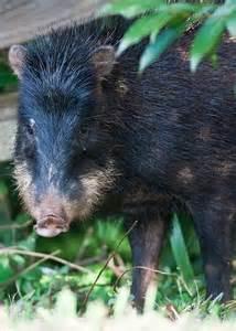 South America Unusual Animals