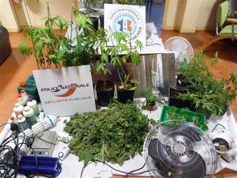 il cultivait des plants de cannabis dans sous sol pour