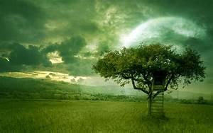 Desktop Nature wallpaper: green nature photography, photos ...