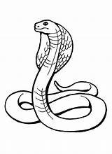 Snake Coloring Pages Printable Print Cobra sketch template