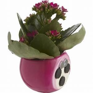 Cache Pot Magnétique : plante cache pot magn tique 5 10 chez leroy merlin home le 19 home touch et green ~ Teatrodelosmanantiales.com Idées de Décoration