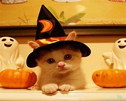 Halloween Happy Backgrounds Wallpapers Cat Cool Desktop