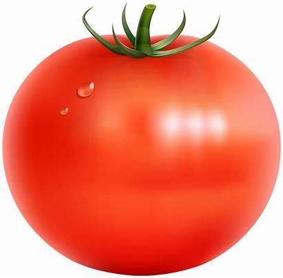 Tomato Transparent Clip Clipart Vegetables Border Simple