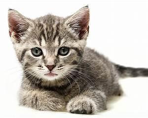 Weißer Wurm Katze : fotos k tzchen katze blick tiere wei er hintergrund ~ Markanthonyermac.com Haus und Dekorationen