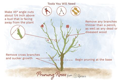 bathroom reno ideas small bathroom how and when to prune roses