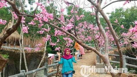 menikmati suasana wisata negeri sakura  pamekasan