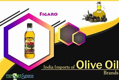 Oil Brands Olive India Imported Into