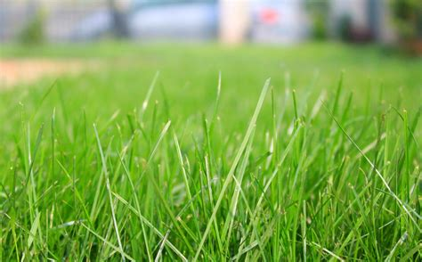 How To Prepare Soil For Grass Seed, Important Steps For A