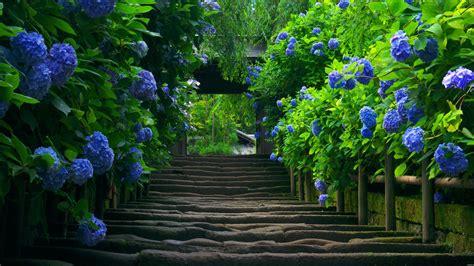 stairway   garden  nature hd wallpapers