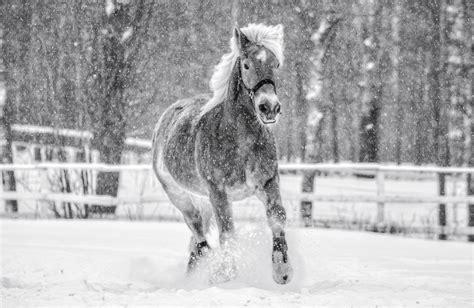vertebrates invertebrates horse related animal blizzards posts