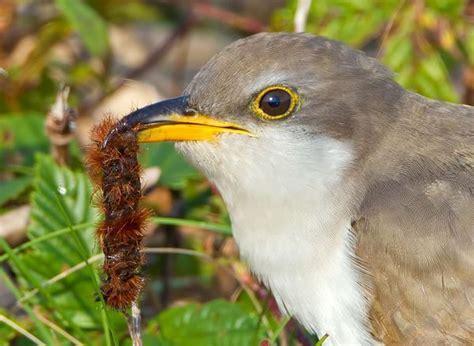 birdnote q a what birds eat