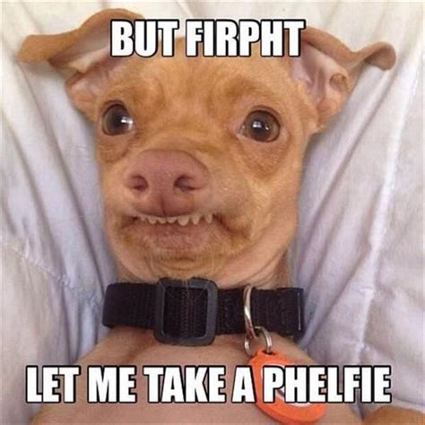 Ph Memes - stephen with a ph dog meme www pixshark com images galleries with a bite