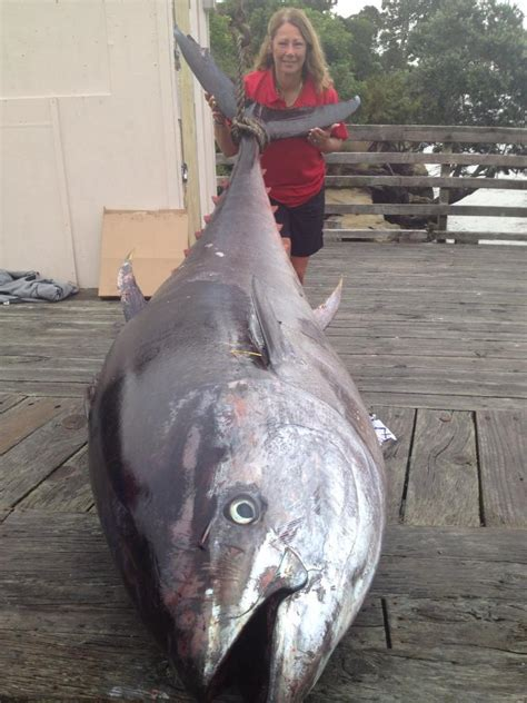 907pound Tuna Fish Caught By New Zealand Angler Donna