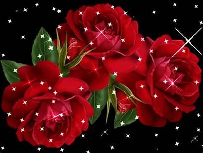 Rose Di Mazzo