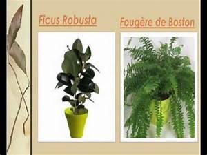 Grande Plante Verte D Intérieur : liste des plantes vertes d 39 int rieur youtube ~ Voncanada.com Idées de Décoration