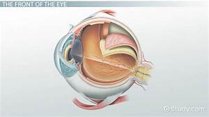 Parts Of The Eye And Their Functions