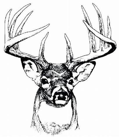 Deer Coloring Head Pages Printable Getcolorings