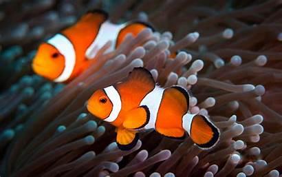 Fish Clown Clownfish Cool Vertical Wallpapertag 1080