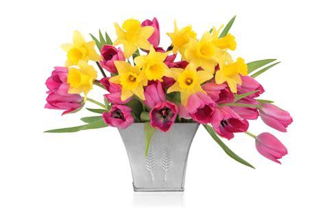 vase für tulpen narzissen und tulpen in einer vase 187 keine gute idee
