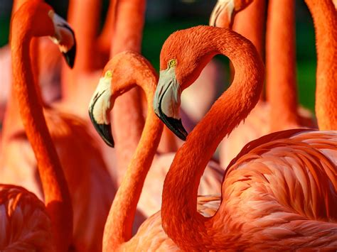 zoos zoo diego san nast magazine getty indianapolis cntraveler conde traveler animal