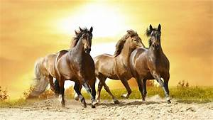 List of Horse Breeds Beginning with N & O - YouTube