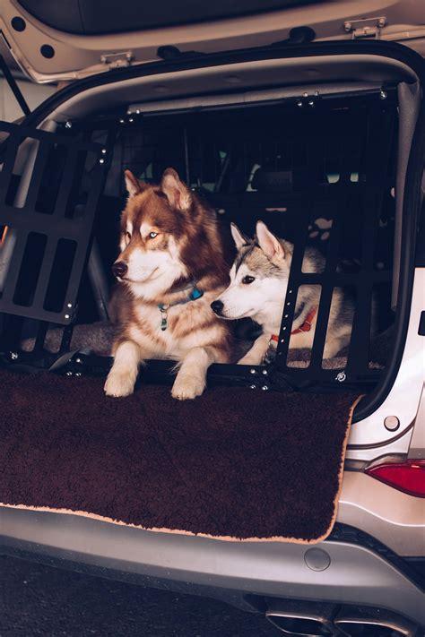 hundegitter oder hundebox  transportieren wir unsere