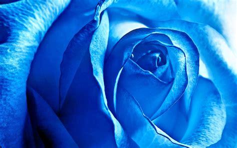 Hd Wallpaper Background Image Id Anime Jpg 2880x1800 Supreme Trunks Plant Flower 08 Blue Versionone 125243