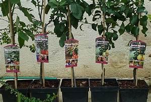 Arbres Fruitiers Nains En Pleine Terre : fruitiers nains semences ~ Premium-room.com Idées de Décoration