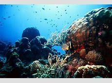 Miss Reef Wallpaper WallpaperSafari