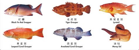 fish poisoning hong kong commonly ciguatera coral ciguatoxin food english hk pork cfp reef braised roast tail involved 2000 june