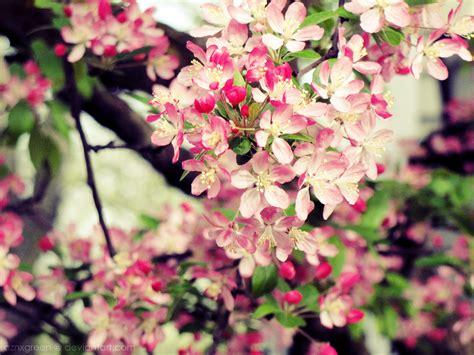 cherry blossom tree l wish list wednesday 03 28 2012 the bibliotaphe closet