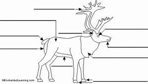 Label Reindeer Printout