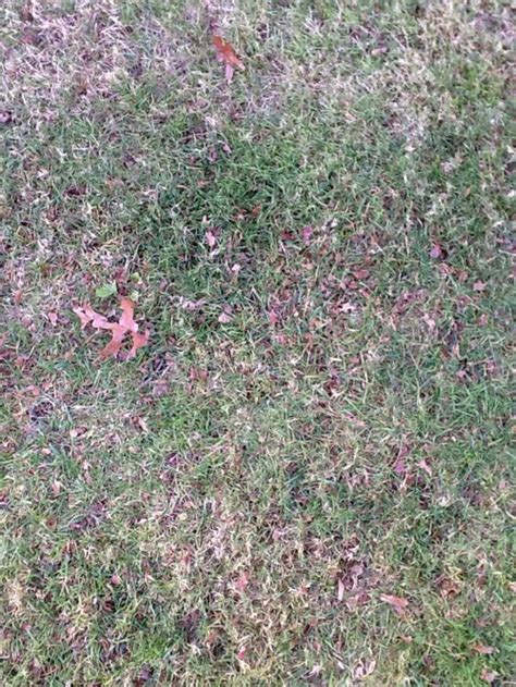 how to get rid of creeping naturally how to get rid of creeping bent grass