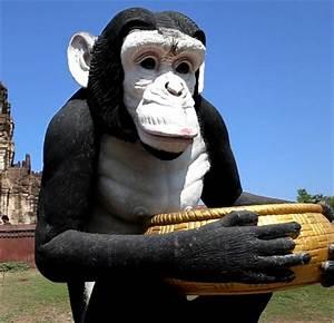 VIDEOExploring the Monkey Temple of Lopburi David's