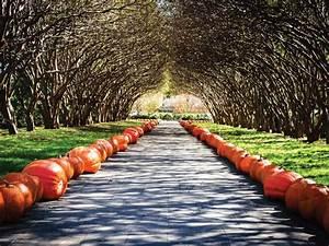 Pumpkins at the Dallas Arboretum HGTV