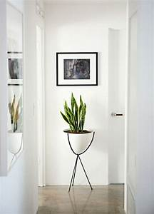Pflanzen Für Gesundes Raumklima : zimmerpflanzen pflegeleicht sorgen sie f r ein gesundes raumklima raumklima zimmerpflanzen ~ Indierocktalk.com Haus und Dekorationen