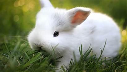 Rabbit Wallpapersafari