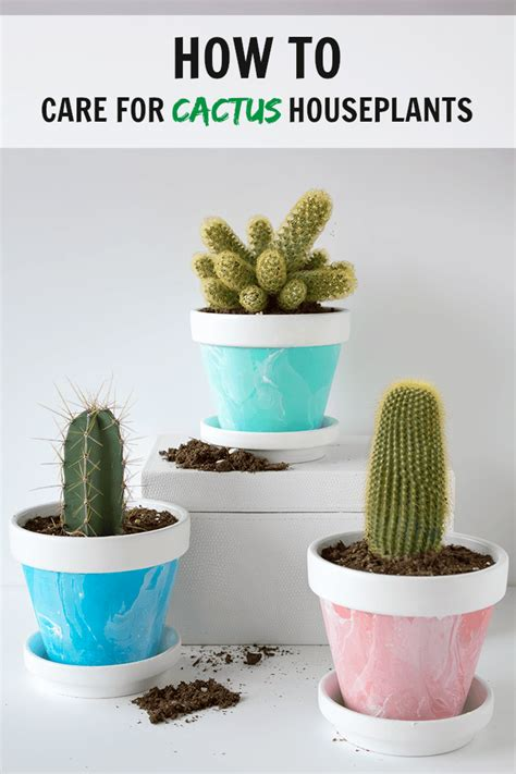 how do you care for bushes how to care for cactus houseplants