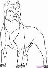 Dog Bing Coloring Drawings Pitbull Cartoon Dogs Drawing Animal sketch template