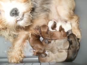 Abused Dog Animal Abuse